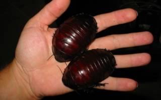 Коктейль Cockroach Таракан