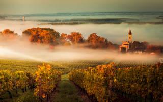 Обзор видов белого вина
