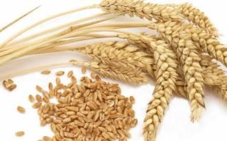 Как приготовить самогон из пшеницы в домашних условиях
