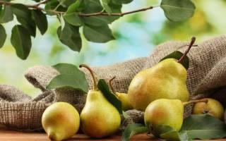 Как приготовить самогон из груш в домашних условиях