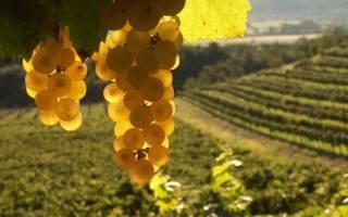 Обзор марок и видов сербских вин