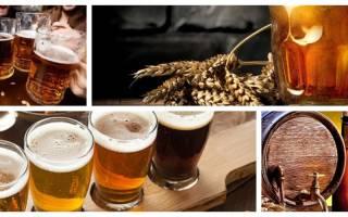 Польза и вред живого пива